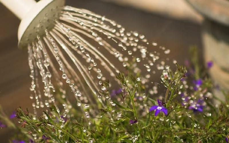5 Cara Memanfaatkan Air Buangan Ac