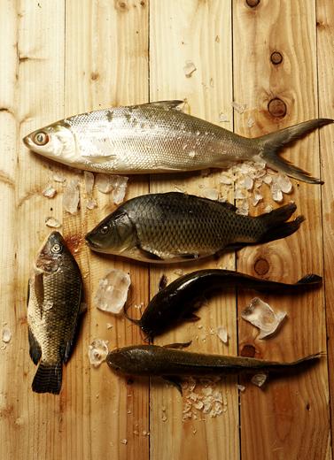 Kalimantan: Surganya Ikan Sungai