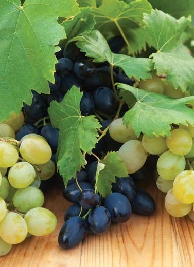 Mencuci Anggur
