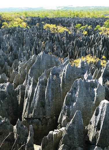 Meniti Hutan Batu Tsingy de Bemahara