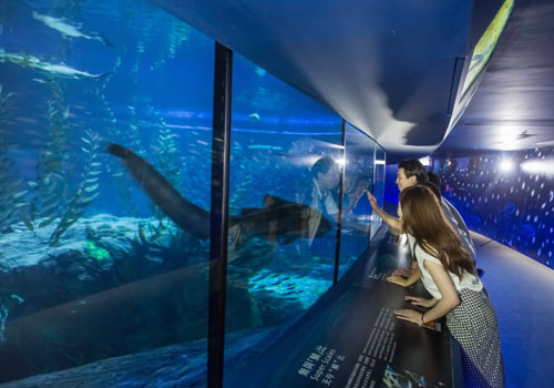 Akuarium Hiu Terbesar di Asia