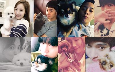 8 Bintang Korea Memamerkan 'Kekasih' Mereka