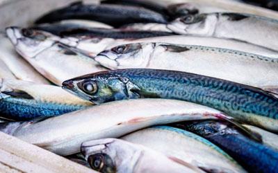 Heboh Cacing dalam Ikan Kalengan, Ini Bahaya Mengonsumsi Ikan yang Terkontaminasi Cacing