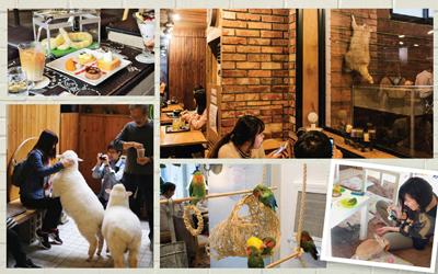Tren Pet Café yang Mulai Naik Daun, Dari Kucing Hingga Domba!