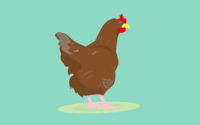 Benarkah Daging Ayam Mengandung Hormon?