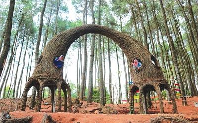 Jalan-Jalan Yogyakarta: Hutan Pinus Pengger, Yogyakarta untuk Anda yang Ingin Foto di Lokasi yang Menantang
