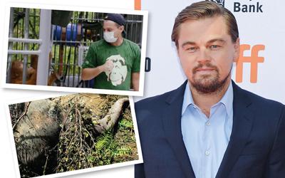 Film Before The Flood Ditonton Lebih Dari 30 Juta Penonton, Leonardo DiCaprio Pecahkan Rekor Dunia
