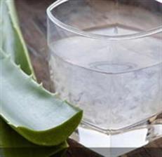 Sehat dan Segar Aloe Vera